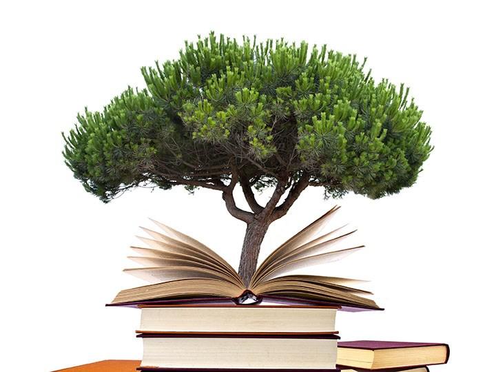 Literacy tree.jpg