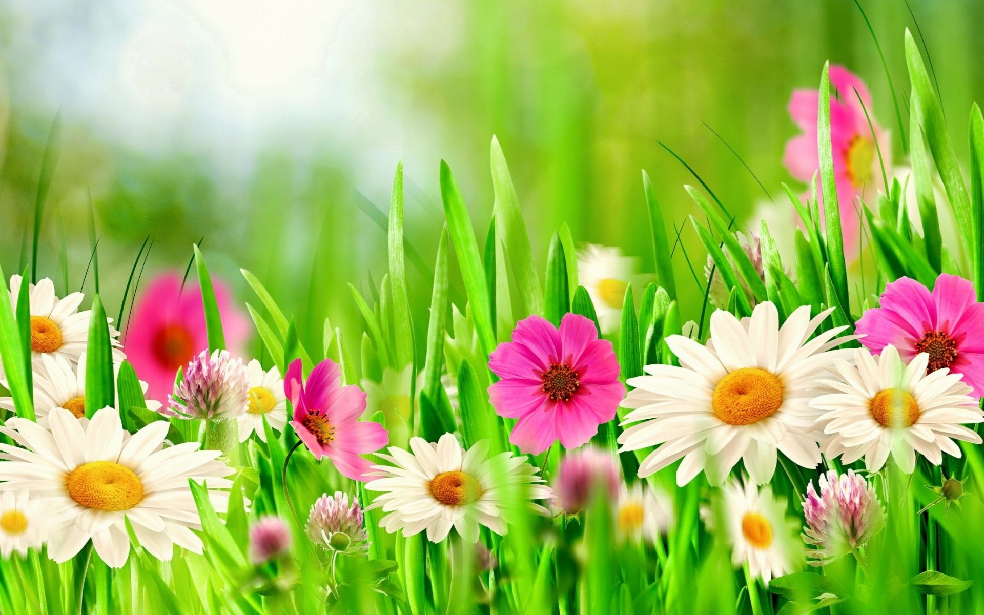 spring-flowers-backgrounds-19.jpg