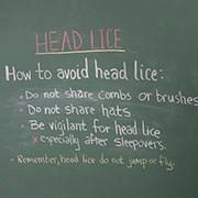 Head Lice.jpg